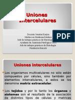Uniones intercelulares