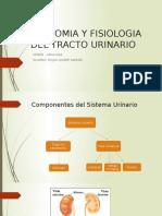 Anatomia y Fisiologia Del Tracto Urinario