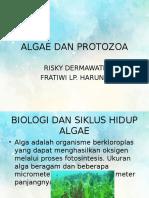 Algae Dan Protozoa
