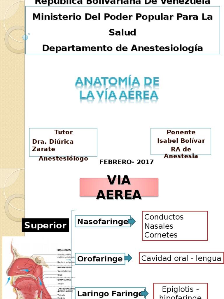 Famoso Anatomía Vía Aérea Nasal Ideas - Imágenes de Anatomía Humana ...