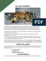 abeja macerada.docx