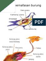 Organ pernafasan burung.pptx