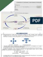 Aminoacidos 15-I.pptx