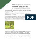 Aéreas Verdes de Huehuetenango Que Ya No Existen Por Contaminación