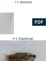 H 1 (Kontrol).pptx