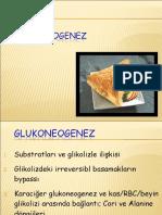 gluconeogenez12