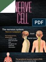 nerve project pptx