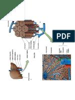 Anatomía Del Aparato Digestivo2