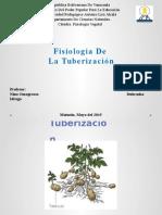 Tuberizacion
