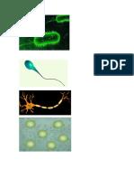 Organismos celulares
