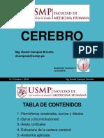 6. CEREBRO MORFOLOGÍA EXTERNA.pdf