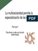 Tejidos_animales.pdf