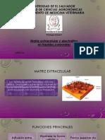 Matriz Extracelular y Electrolitos en Líquidos Corporales G06