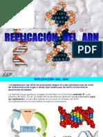 Replicacion Adn