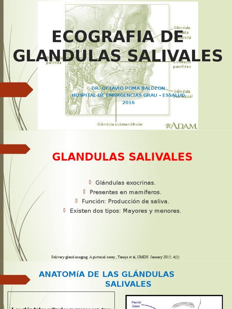 Ecografia de Glandulas Salivales