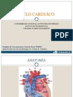 Ciclocardiaco