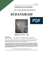 Sudan Grass 04