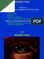 (3b) Org. Sensoris B