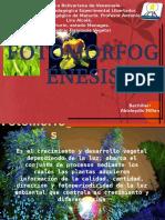 FOtomorfogénesis.pptx