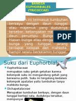 kelompok-7-euphorbiaceae