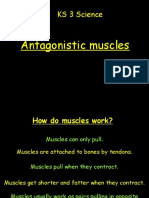 [12138]Antagonistic Muscles
