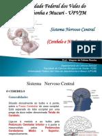 Sistema Nervoso Cerebelo Núcleos Da Base e Córtex Cerebral