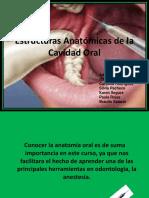 252 Anatomia, Anestesia