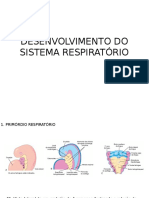 Desenvolvimento Do Sistema Respiratório