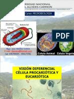Microbiologia - Diferencias Pro y Eucariota y Morfologia Bact