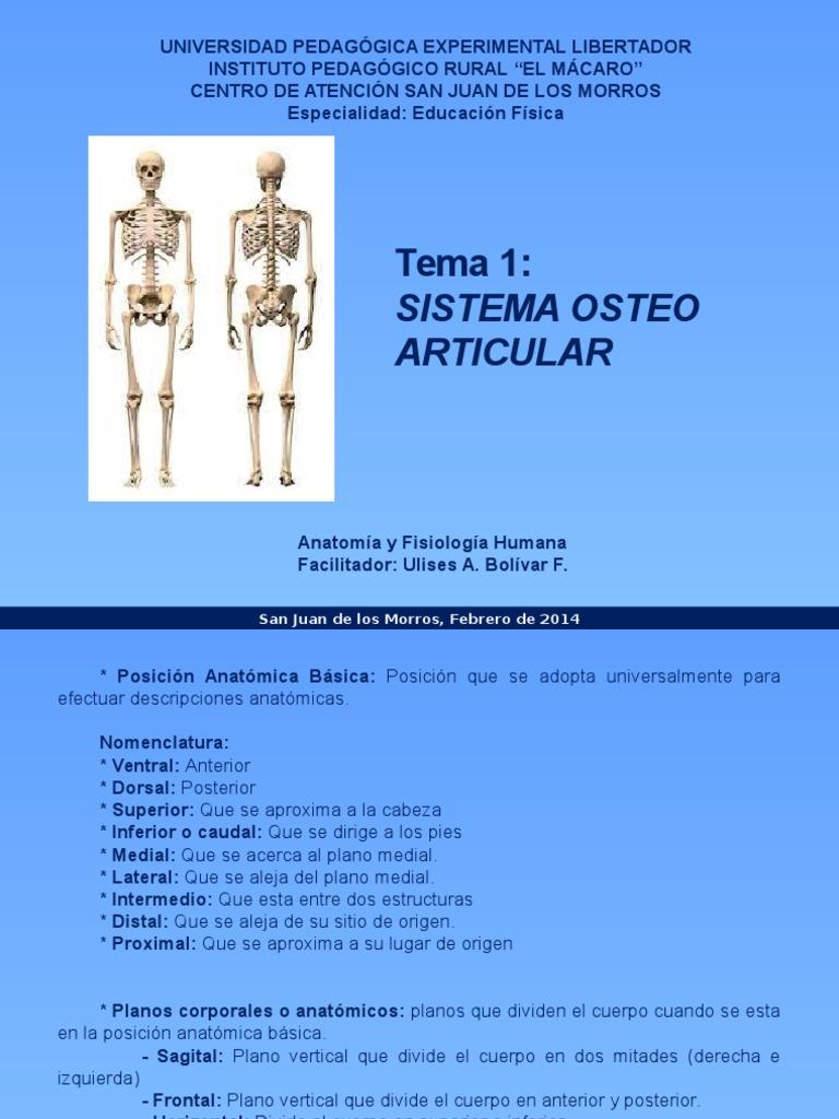 Tema 1. Anatomia