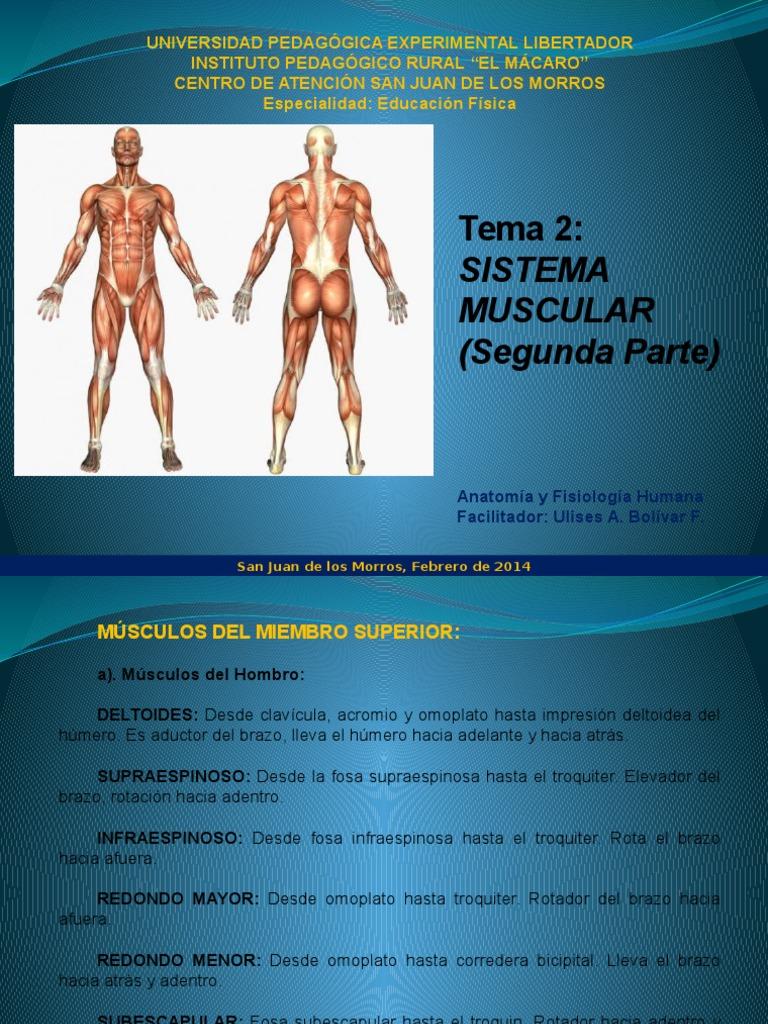 Tema 2. (Segunda Parte) Anatomia