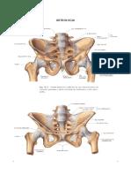 Artrología Miembro Inferior