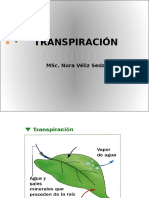 TRANSPIRACIÓN.pptx
