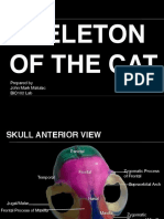 Skeleton of the Cat