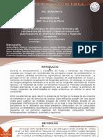 Efecto Antifungico de Extractos Fenólicos y de Carotenoides de Chiltepín (Capsicum Annum Var. Glabriusculum) en Alternaría Alternata y Fusarium Oxysporum