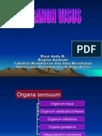 ANAT Organon Visus.ppt