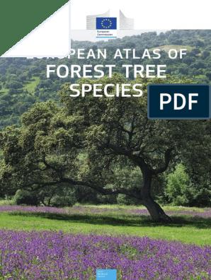 European Atlas of Forest Tree Species | Oak | Pine