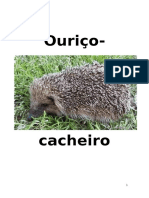 Ouriço cacheiro