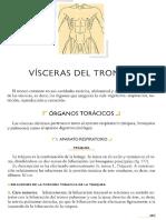 ROUVIERE TOMO 2 (Tronco) Pulmones