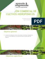 Produccion Comercial de Cultivos Hidroponicos