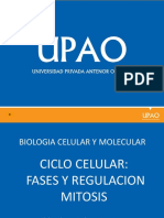 Ciclo Celular y Regulacion Mitosis