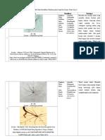 Tabel Identifikasi PLankton