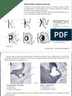 atlas embrio an 2 sem 2.pdf