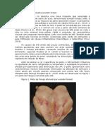 Características da miopatia wooden breast.docx