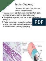 Jaringan Epitel Pspd 2013 Print