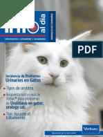 Información al  Dia Gatos