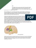Mekanisme Neurologis Bicara
