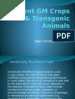 Current GM Crops & Transgenic Animals