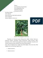 klasifikasi jambu jamaika