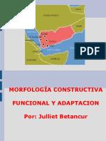 Morfologia constructiva